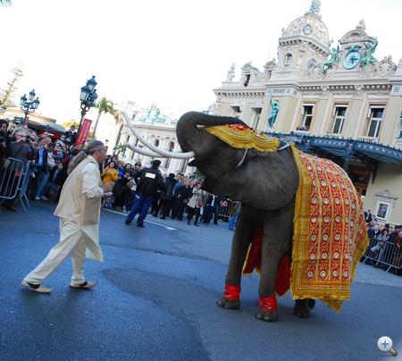Az egyik elefánt az esküvői menetből