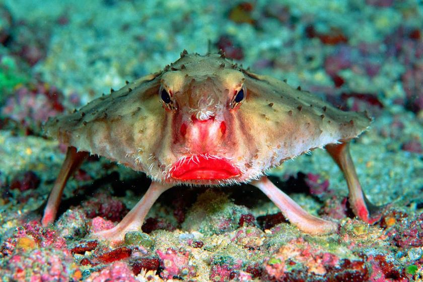 Rosszul úszik, de legalább csókos ajkai vannak: elbánt a természet a hallal