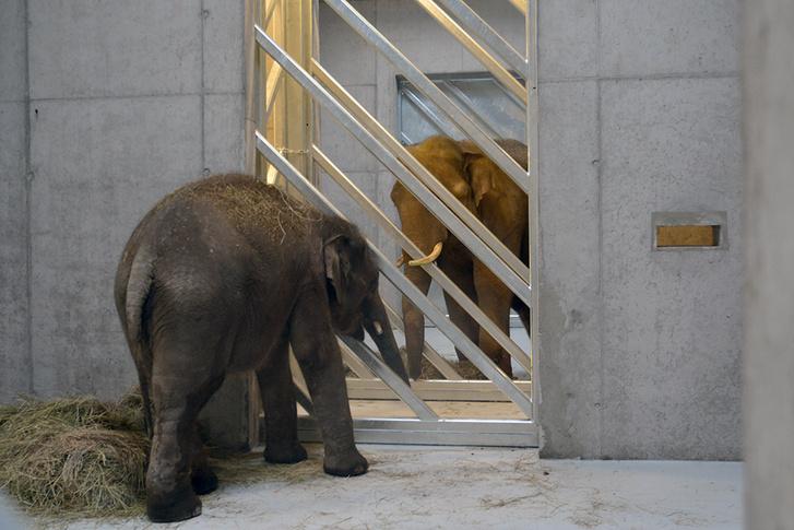 elefant 05