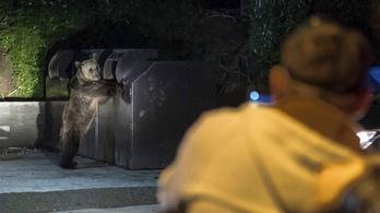 Medve támadt egy csíksomlyói búcsúra érkezett magyar zarándokra