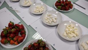 Teszt: A leggörögebb feta sajt nyomában