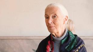 Jane Goodall: nem kölcsönözzük, ellopjuk a Földet