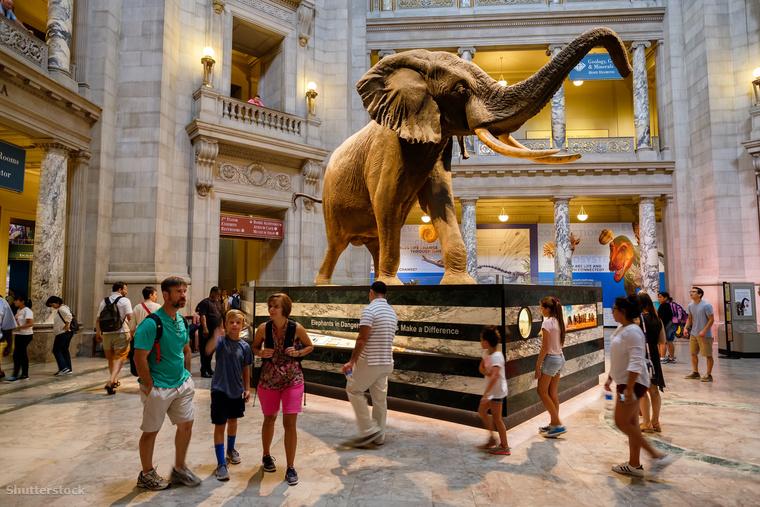A washingtoni Természettudományi Múzeumban százhuszonhat példányt és műtárgyat találhatsz, köztük harmincmillió rovart és négyszázezer fényképet