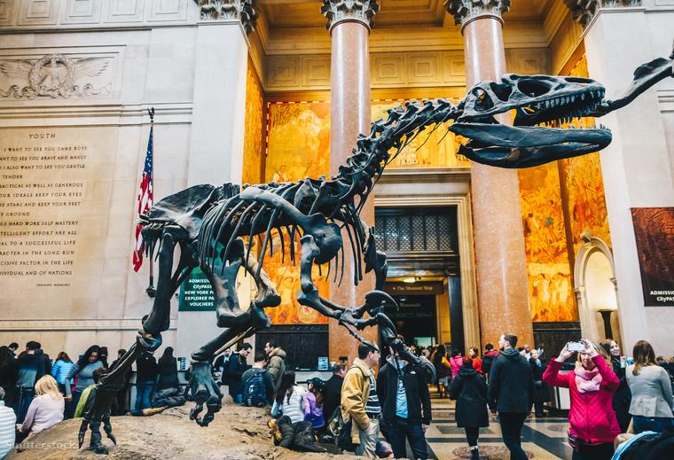Az Amerikai Természettudományi Múzeumot 1869-ben alapították New Yorkban