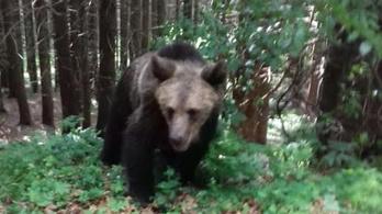 Medvekvótát vezetnek be Romániában