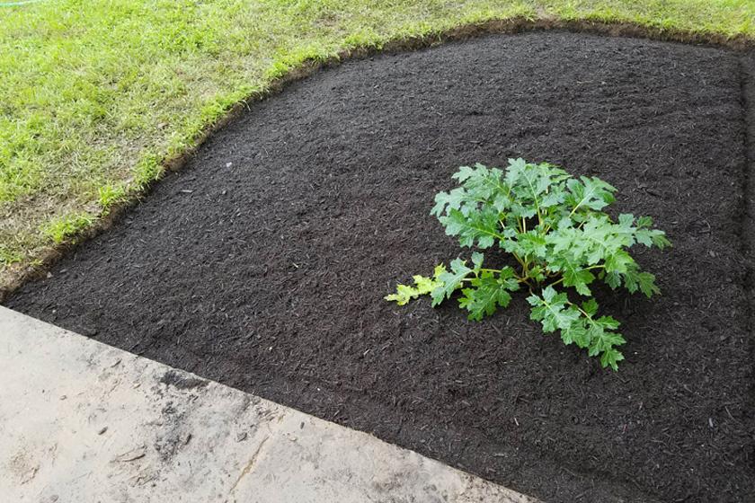 Egyáltalán nem értett a kertészkedéshez. Ezt az első növényt is félve ültette el: attól tartott, másnapra tönkremegy majd.