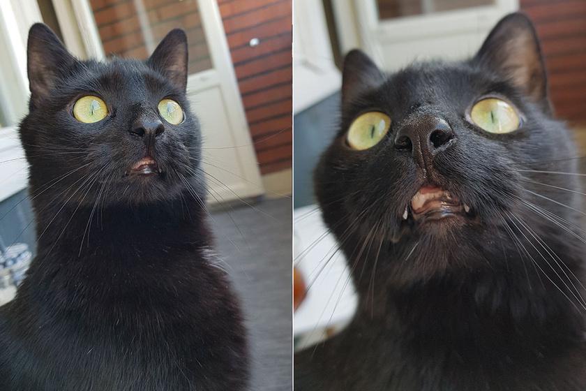4 év bezártság után kiengedték a macskát: így reagált a külvilágra