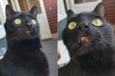 macska 4