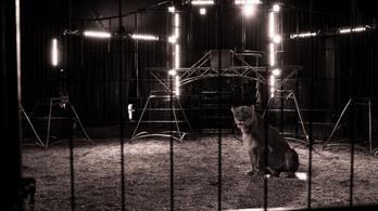 Ide nekem az oroszlánt is!