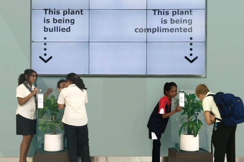A két teljesen ugyanolyan növényt egyforma környezetbe helyezték az iskola egyik termében, majd pedig igen furcsa feladatot adtak a kicsiknek.
