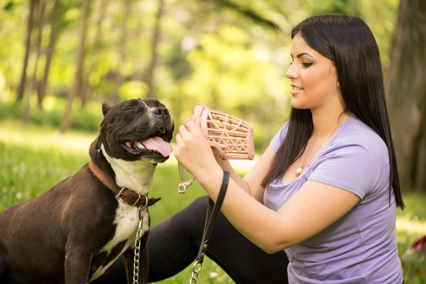 Mikor kötelező a póráz és a szájkosár? Büntetés vagy nagyobb baj is lehet a kutyasétáltatásból