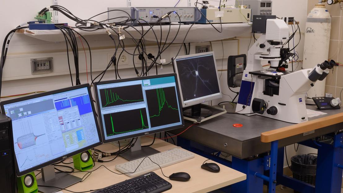 Az Élettani és Neurobiológiai Tanszék Idegi Sejtbiológiai Munkac
