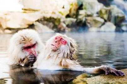 vicces-majmok