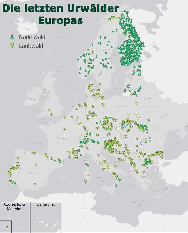 Lombhullató és örökzöld őserdők Európában