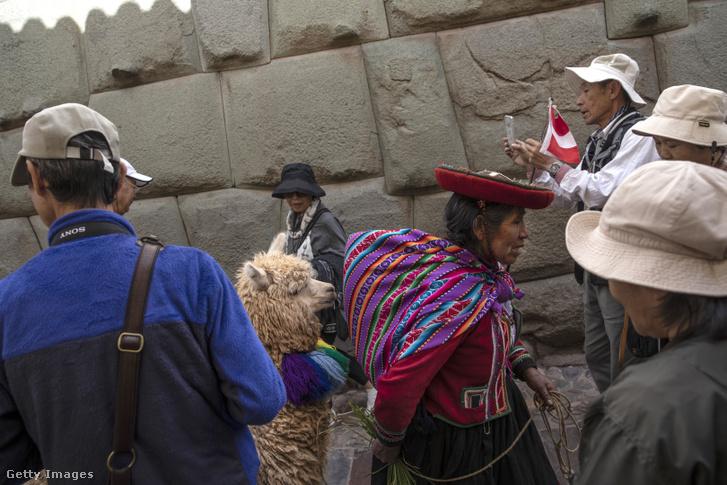Kecsua (inka leszármazott) indián nő vezeti alpakáját Cuscoban