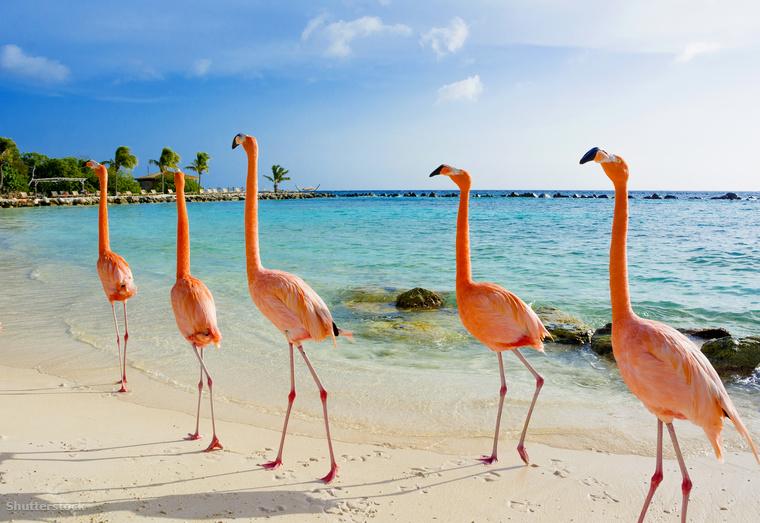 Aruba egy 36 kilométer hosszú és 11 kilométer széles sziget a Karib-tenger déli részén