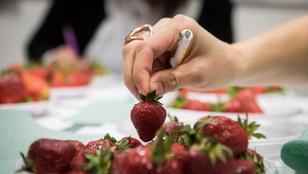 Teszt: a piacon vegyél epret, ha kedves az életed