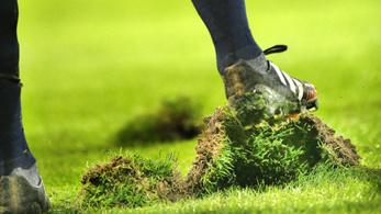 A holland futballban a fűre esküsznek