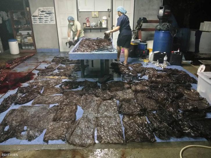 80 zacskót távolítottak el az állat emésztőrendszeréből
