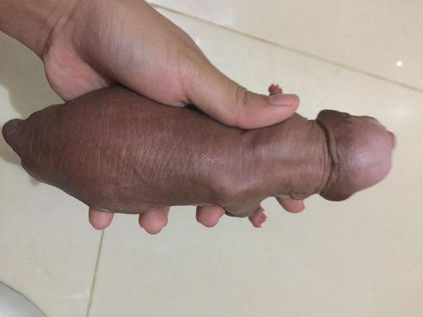péniszkutya