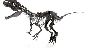Elhappolják a gazdagok a dinócsontvázakat a tudósok elől