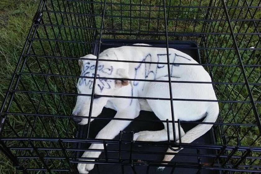 A ketrecre és a benne kuporgó, ijedt kutyára a parkban sétálgató járókelők találtak rá a múlt héten, és azonnal hívták a rendőrséget.