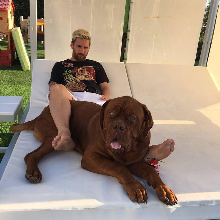 Kilencedik tény:Ez a kutya baromi nagy.