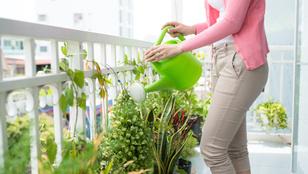 Hogyan öntözd növényeid a kánikulában?