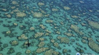 Példátlan pusztulás az ausztrál Nagy-korallzátonyon