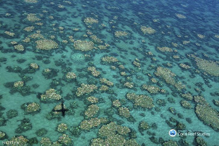 Az Ausztrál Kutatási Tanács Excellence for Coral Reef Studies Központja által közreadott dátumozatlan képen a megfigyelést végző repülőgép árnyéka vetül az ausztráliai Nagy Korallzátony sérült koralljaira Queensland államban. Egy levegőből végzett vizsgálat 2017 áprilisában közreadott eredménye szerint korábban sohasem látott korallfehéredés sújtja a Nagy Korallzátony északi és középső harmadát.