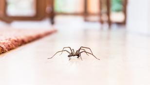 Ne irtsd a pókokat, veled vannak!