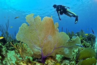 merülés-búvár-tenger