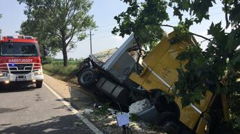 Fának ütközött egy kamion a 81-esen, a sofőr meghalt