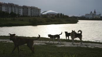 Jön a vb, nagyüzemben irtják az oroszok a kóbor kutyákat