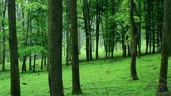 Erdei génmegőrzési program indult Tolnában