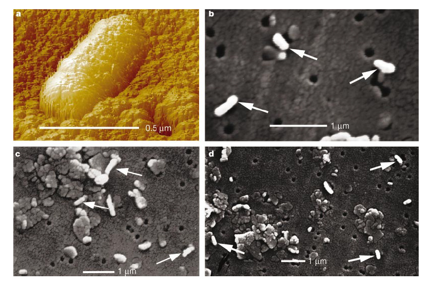 A Vostok-tó idegen baktériumai.