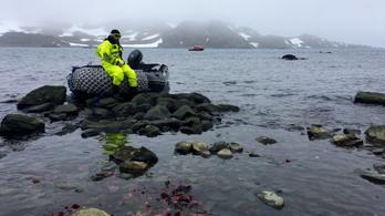 A kutatókat is meglepte, milyen gyorsan olvad az Antarktisz