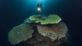 Évi 8 milliárd dollárnyi kárt okozna a korallok kihalása