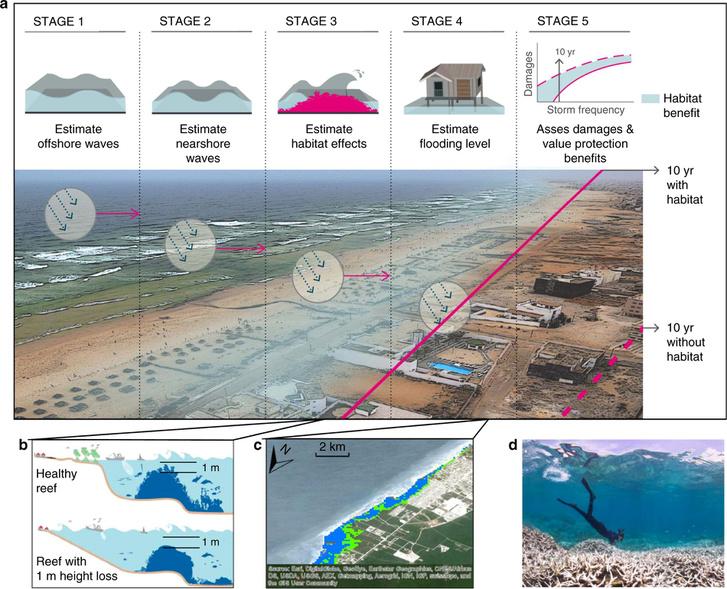 A korallzátonyok pusztulásának becsült hatásai