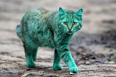 zold-macska