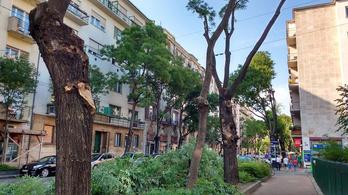 Leállították a Pozsonyi úti fák kaszabolását