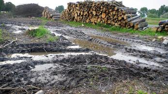 200 ezer négyzetméteren irtják ki az erdőket az M76-os autóút miatt