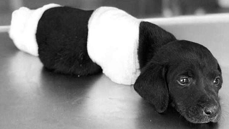 Politikai ügy lett a megcsonkított kiskutya halálából