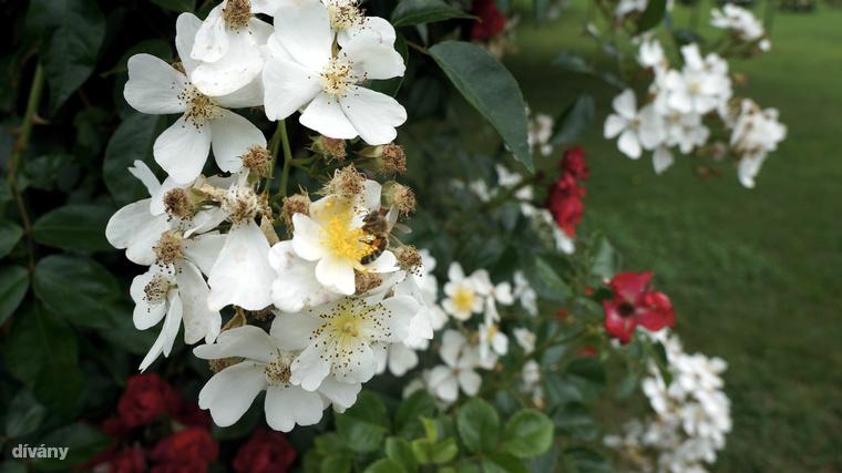 És hogy mit érdemes még megnézni a városban? Itt található Ausztria legnagyobb rózsagyűjetménye, ami nagyjából 30 ezer rózsatövet, és több mint 800 fajtát számlál