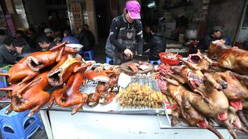 Egy dél-koreai bíróság kimondta: nem lehet kutyákat ölni a húsukért