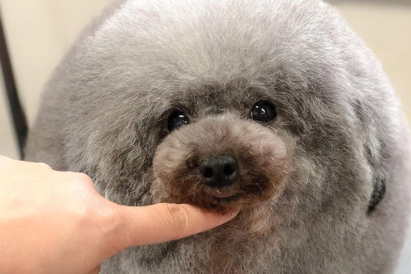 A fél internet azon nevet, amit ez a kozmetikus művel a kutyákkal