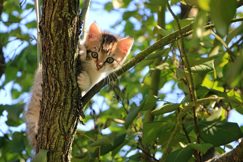 Van egy apróság a macskákon, amitől az is elolvad, aki nem cicapárti