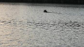 Medve úszkált a Holt-Tiszában Szolnoknál