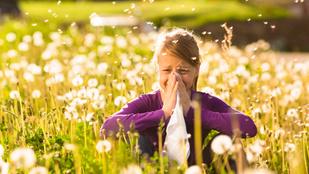 Allergia ellen a takarítás az első! Így csináld, hogy megúszd a tüneteket!
