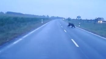 Már a déli határnál is szaladgál egy medve